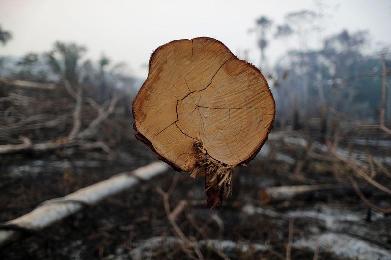 Países que criticam desmatamento no Brasil são receptadores de madeira irregular, acusa Bolsonaro