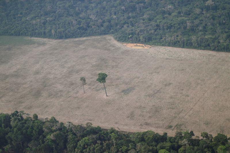 Desmatamento na Amazônia dispara para nível mais alto em 12 anos