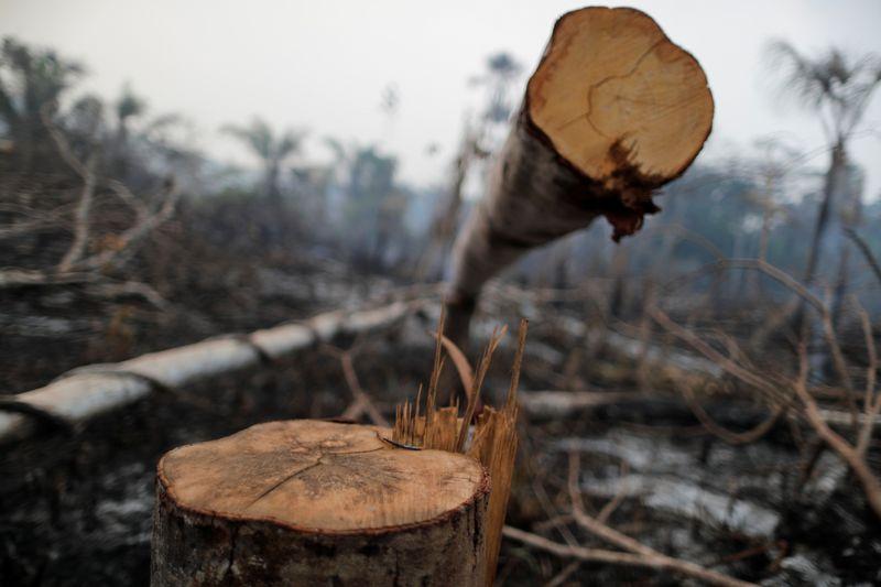 Meta climática do Brasil põe em risco investimentos no país, diz coalizão de empresas