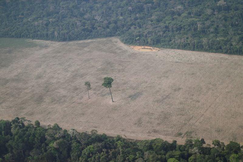 Desmatamento na Amazônia cresce 13,7% em dezembro, diz Inpe