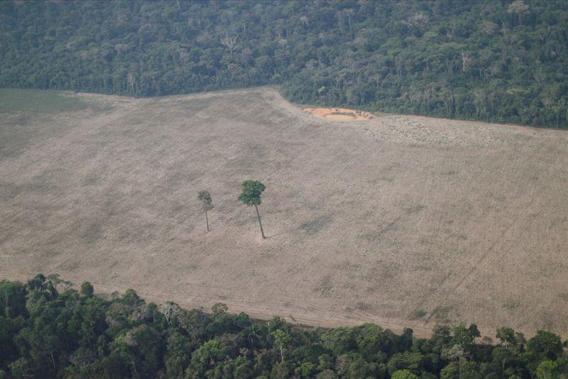 Desmatamento aumenta, mas multas ambientais no país caem 20%