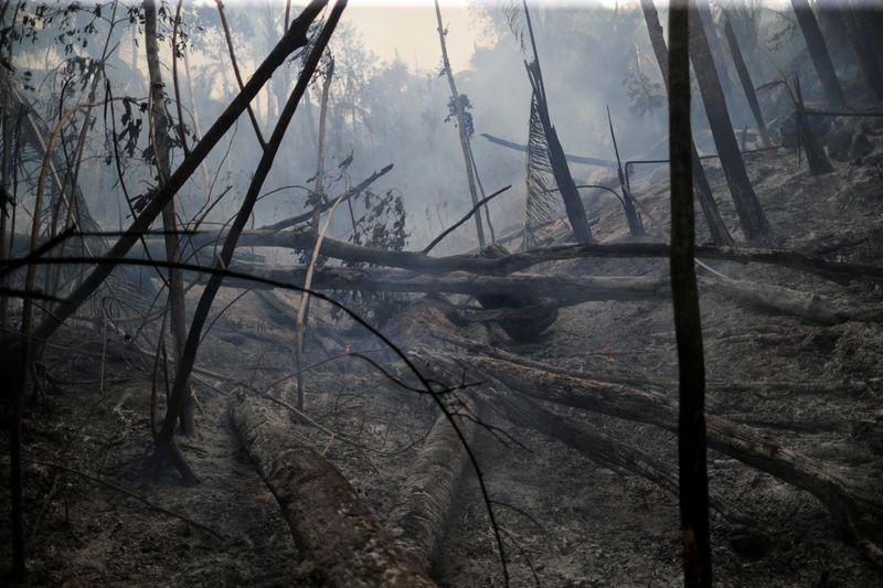 Governo vai retirar militares da Amazônia e focaráfiscalizações em 11 municípios
