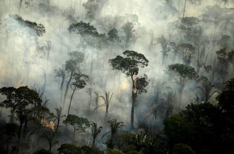 Coca-Cola adere a programa Adote um Parque na Amazônia