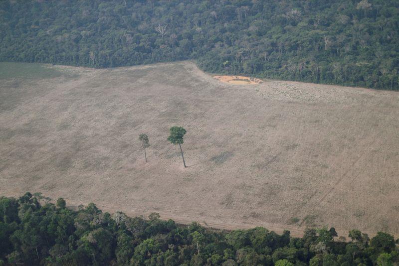 Governo autoriza uso da Força Nacional em operações contra desmatamento na Amazônia