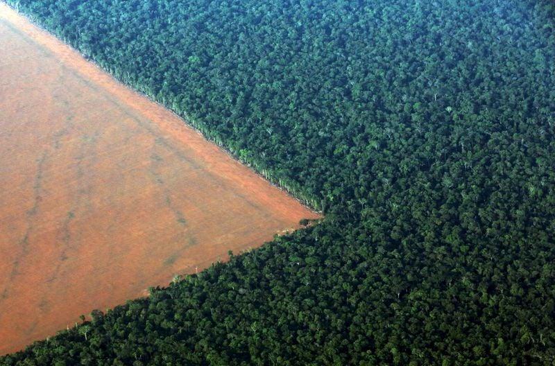 Desmatamento na Amazônia cresce pelo quarto mês seguido