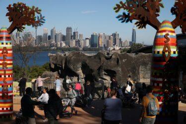 Zoológico de Sydney apresenta 1º filhote de coala nascido em um ano