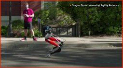 Robô bípede da Universidade do Oregon bate recorde em corrida de 5 km
