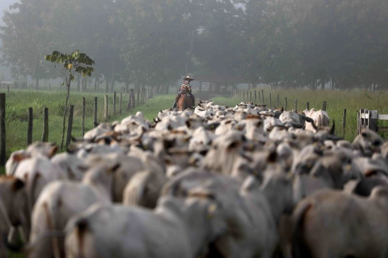 ESPECIAL-Um produtor tentou, em vão, fazer pecuária na Amazônia mais sustentável