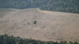 Dois terços de floresta tropical do mundo foram destruídos ou degradados, diz ONG