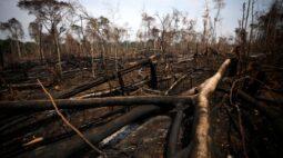 Cientistas afirmam que apenas 3% da superfície terrestre permanece intacta