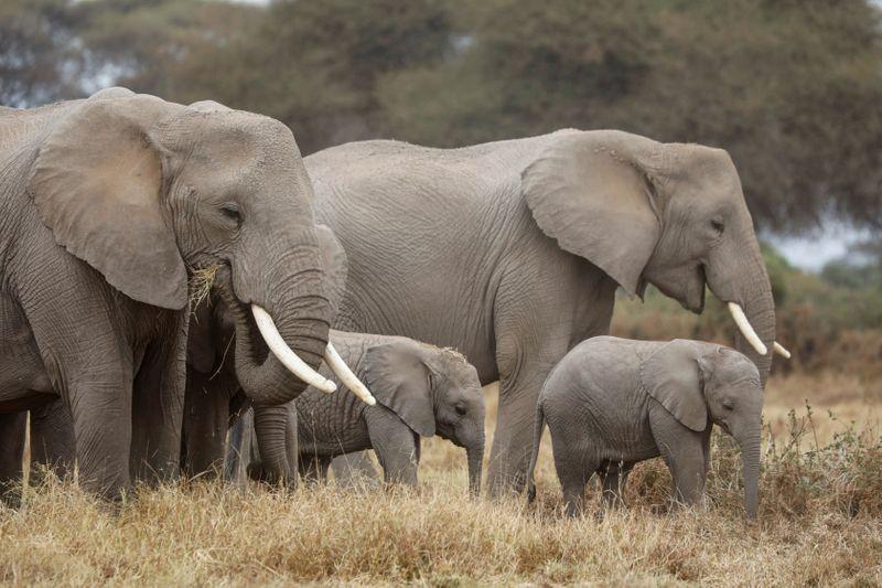 Caçador de elefantes no Congo é condenado a 30 anos de prisão; conservacionistas comemoram
