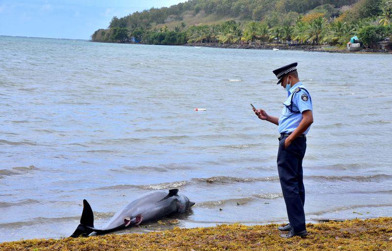 """""""De cortar o coração"""": 40 golfinhos morrem em área de vazamento de petróleo nas Ilhas Maurício"""