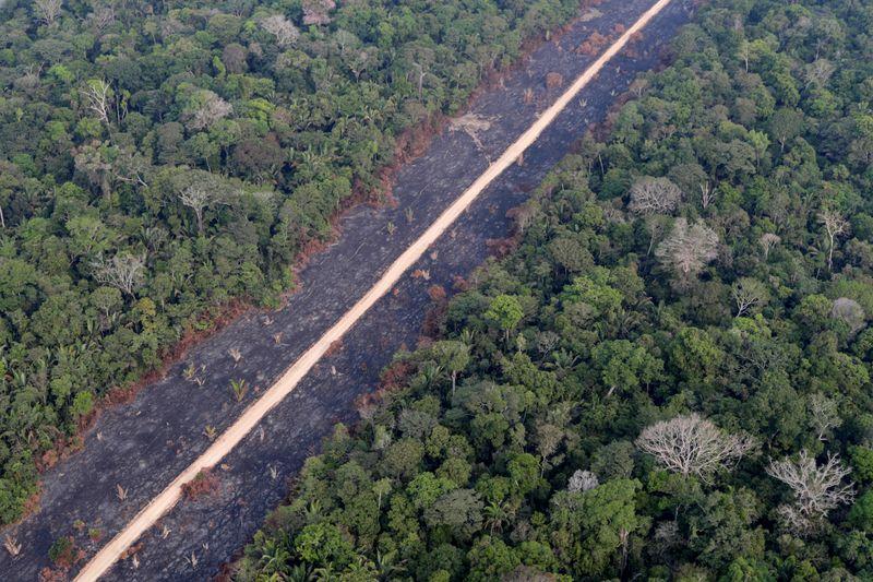 Abertura de estradas na Amazônia pode desmatar milhões de hectares, diz relatório