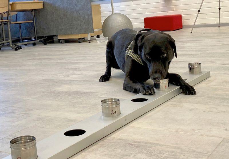 Cães são usados para detectar coronavírus em projeto-piloto de aeroporto de Helsinque