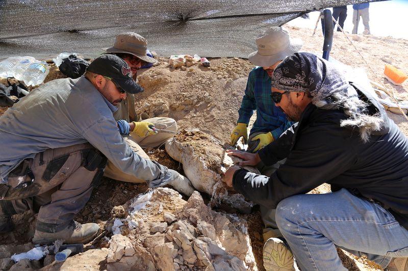 Restos de predador de mar jurássico é encontrado no deserto do Atacama