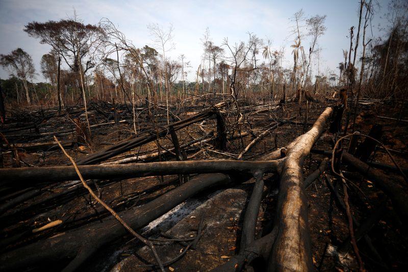 """Perda global de florestas tropicais foi """"persistente"""" em 2020, mas sudeste da Ásia oferece esperança"""