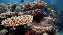 Unesco deixa Grande Barreira de Corais fora de lista de patrimônios mundiais em perigo