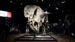 """""""Big John"""", o maior tricerátope conhecido, é leiloado por 6,65 milhões de euros"""