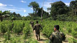Produtores peruanos suspendem protesto para negociar com governo sobre erradicação da folha de coca