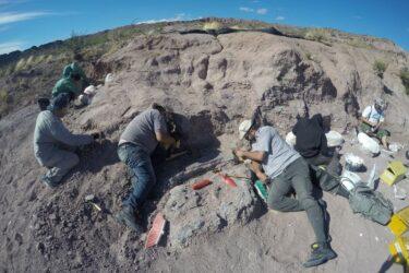 Titanossauro descoberto na Argentina é o exemplar mais antigo da espécie