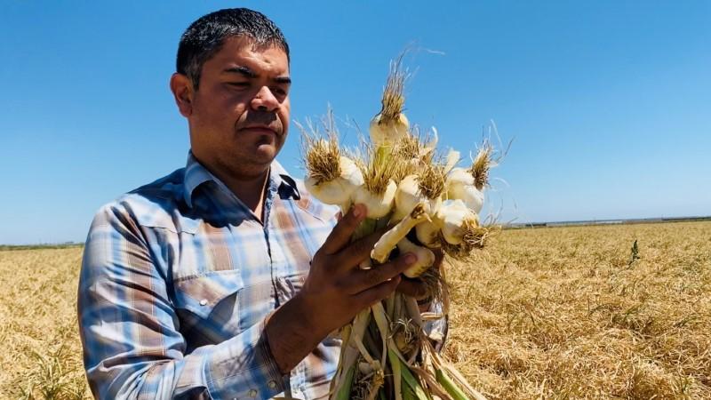 """""""Não tem água"""", diz gerente de fazenda da Califórnia forçado a desistir de plantio"""