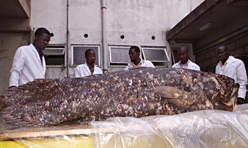 """Peixe rotulado uma vez como """"fóssil vivo"""" surpreende cientistas novamente"""